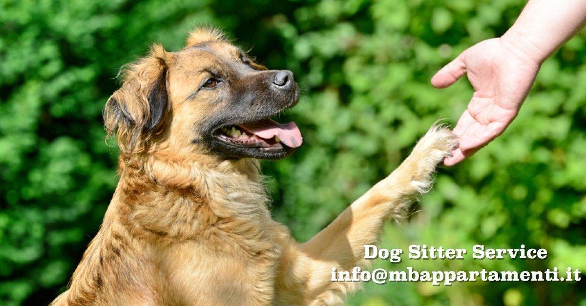 727_servizio_dog_sitter